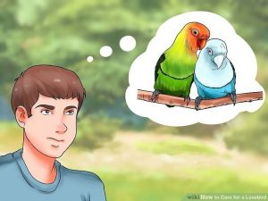 HOW TO TAKE CARE OF  A LOVEBIRD