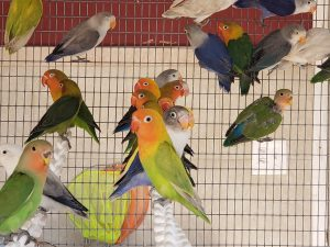 What is Happening to bird prices? They Keep on going up.