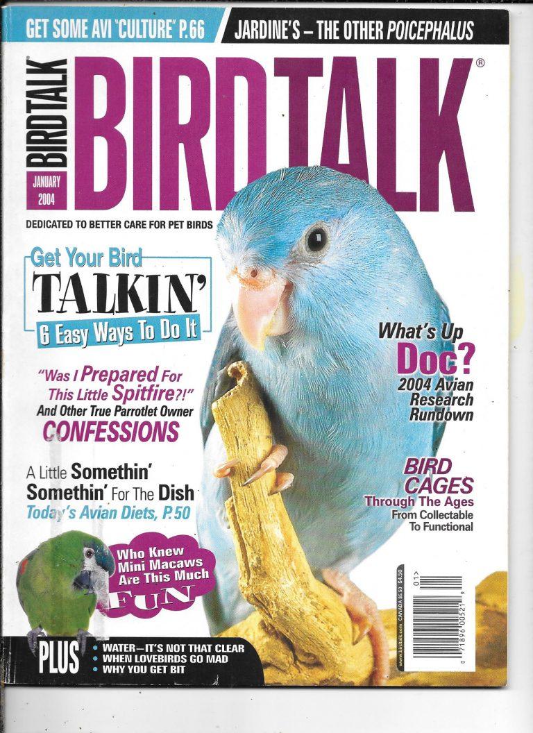 birdtalk January 4