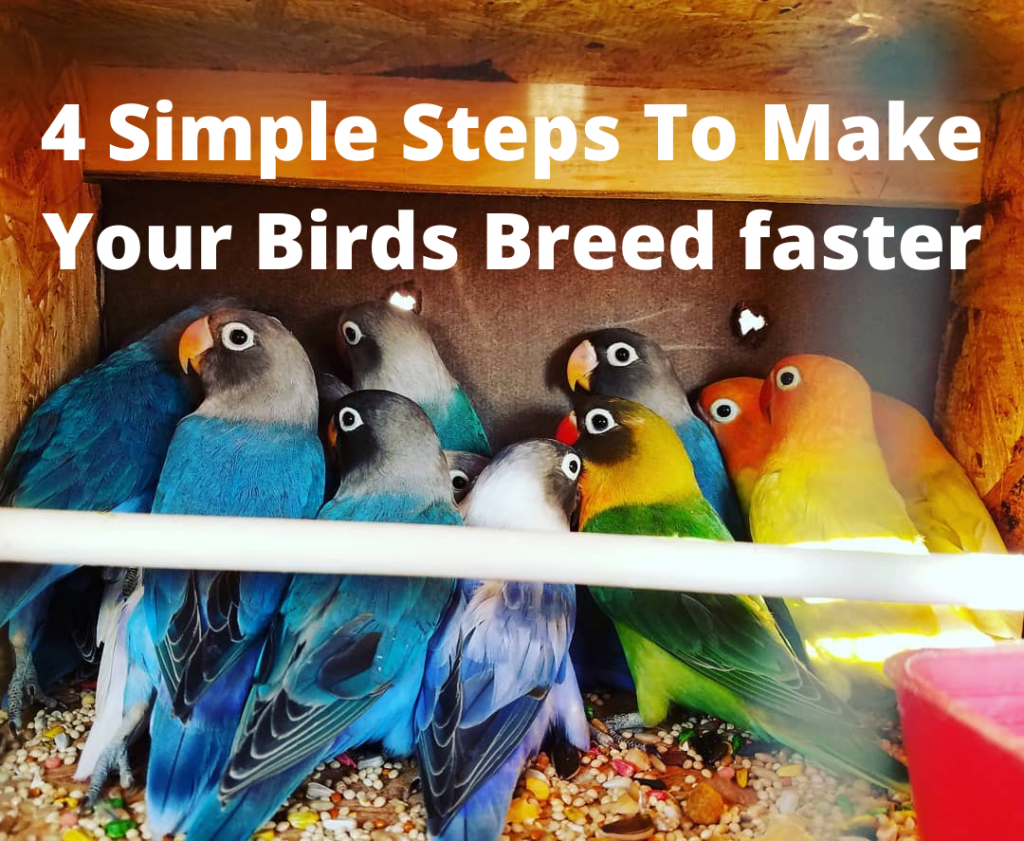Untitled d4 Simple Steps To Make Your Birds Breed fasteresign