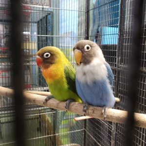 WHY IS MY LOVEBIRD BITING ME?